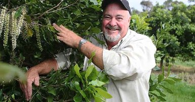 Busy bees go nuts over macadamias