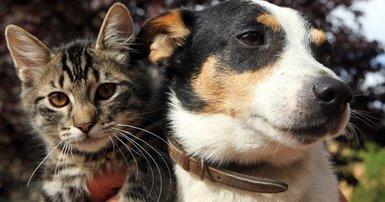 Unsafe foods for pets